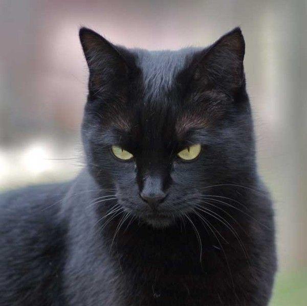 le chat noir. Black Bedroom Furniture Sets. Home Design Ideas