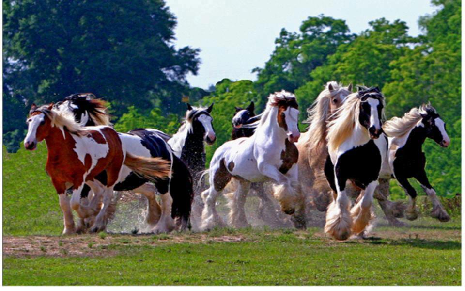cheval wallpaper hd 1 - photo #47