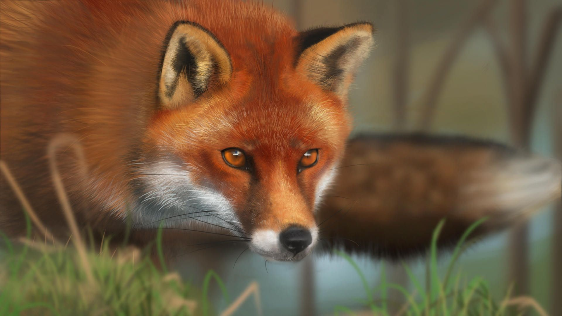 funny wallpaper red fox - photo #15